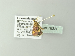 ( - BC ZSM Lep 78380)  @12 [ ] Copyright (2014) Axel Hausmann/Bavarian State Collection of Zoology (ZSM) Bavarian State Collection of Zoology