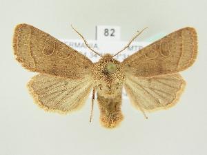 ( - BC ZSM Lep 81978)  @11 [ ] Axel Hausmann/Bavarian State Collection of Zoology (ZSM) (2014) Axel Hausmann/Bavarian State Collection of Zoology (ZSM) SNSB, Zoologische Staatssammlung Muenchen