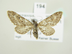 ( - BC ZSM Lep 82090)  @13 [ ] Axel Hausmann/Bavarian State Collection of Zoology (ZSM) (2014) Axel Hausmann/Bavarian State Collection of Zoology (ZSM) SNSB, Zoologische Staatssammlung Muenchen