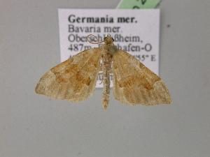 ( - BC ZSM Lep R 21046)  @11 [ ] Copyright (2012) Axel Hausmann/Bavarian State Collection of Zoology (ZSM) SNSB, Zoologische Staatssammlung Muenchen
