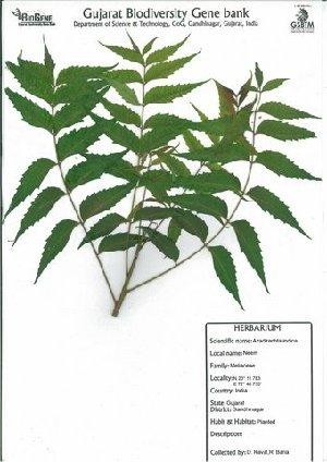 ( - DNAFR000049)  @11 [ ] Copyright (2011) Gujarat Biodiversity Gene Bank Gujarat Biodiversity Gene Bank