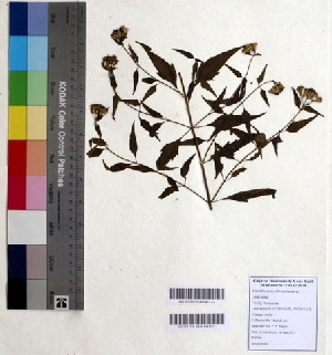 (Chromolaena - DNAFR000353)  @11 [ ] Copyright (2014) Gujarat Biodiversity Gene Bank, GSBTM, DST, GoG Gujarat Biodiversity Gene Bank, GSBTM, DST, GoG