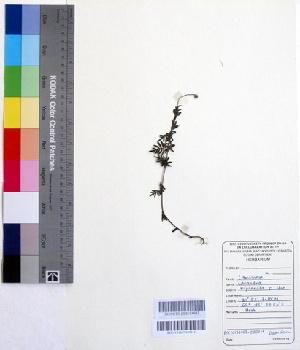 (Lavandula - DNAFR000201)  @11 [ ] Copyright (2014) Gujarat Biodiversity Gene Bank, GSBTM, DST, GoG Gujarat Biodiversity Gene Bank, GSBTM, DST, GoG