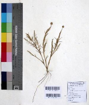 (Chloridoideae - DNAFR000664)  @11 [ ] Copyright (2014) Gujarat Biodiversity Gene Bank, GSBTM, DST, GoG Gujarat Biodiversity Gene Bank, GSBTM, DST, GoG