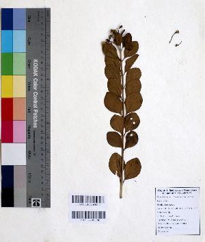 (Clerodendron - DNAFR000665)  @11 [ ] Copyright (2014) Gujarat Biodiversity Gene Bank, GSBTM, DST, GoG Gujarat Biodiversity Gene Bank, GSBTM, DST, GoG