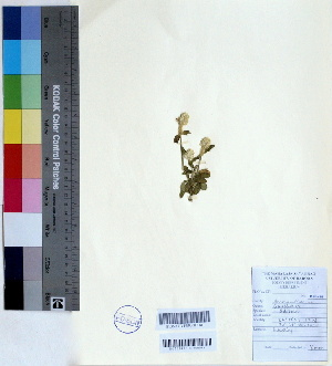 (Gomphrena - DNAFR000460)  @11 [ ] Copyright (2014) Gujarat Biodiversity Gene Bank, GSBTM, DST, GoG Gujarat Biodiversity Gene Bank, GSBTM, DST, GoG