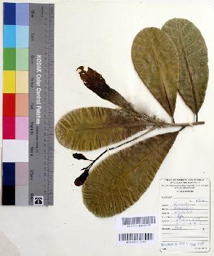 ( - DNAFR000496)  @11 [ ] Copyright (2014) Gujarat Biodiversity Gene Bank, GSBTM, DST, GoG Gujarat Biodiversity Gene Bank, GSBTM, DST, GoG