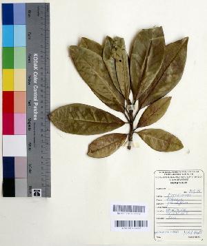 (Magnolia - DNAFR000536)  @11 [ ] Copyright (2014) Gujarat Biodiversity Gene Bank, GSBTM, DST, GoG Gujarat Biodiversity Gene Bank, GSBTM, DST, GoG