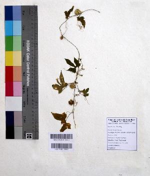 (Diplocyclos - DNAFR000601)  @11 [ ] Copyright (2014) Gujarat Biodiversity Gene Bank, GSBTM, DST, GoG Gujarat Biodiversity Gene Bank, GSBTM, DST, GoG