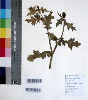 ( - DNAFR000652)  @11 [ ] Copyright (2014) Gujarat Biodiversity Gene Bank, GSBTM, DST, GoG Gujarat Biodiversity Gene Bank, GSBTM, DST, GoG