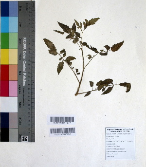 ( - DNAFR000656)  @11 [ ] Copyright (2014) Gujarat Biodiversity Gene Bank, GSBTM, DST, GoG Gujarat Biodiversity Gene Bank, GSBTM, DST, GoG