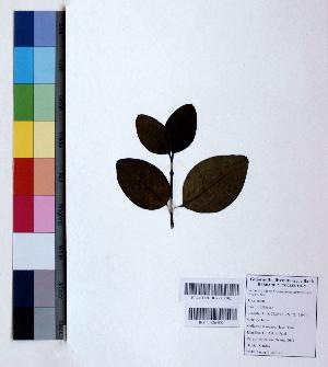 (Eranthemum - DNAFR000819)  @11 [ ] Copyright (2015) Gujarat Biodiversity Gene Bank Gujarat Biodiversity Gene Bank, GSBTM, DST, GoG, India
