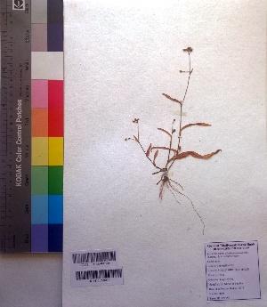 (Murdannia - DNAFR001027)  @11 [ ] Copyrights (2015) Gujarat Biodiversity Gene Bank Gujarat Biodiversity Gene Bank