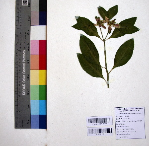 (Euphorbia heterophylla - DNAFR000963)  @11 [ ] Copyrights (2015) Gujarat Biodiversity Gene Bank Gujarat Biodiversity Gene Bank, GSBTM, DST, GoG, India