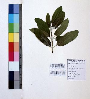 (Couroupita - DNAFR000968)  @11 [ ] Copyrights (2015) Gujarat Biodiversity Gene Bank Gujarat Biodiversity Gene Bank, GSBTM, DST, GoG, India