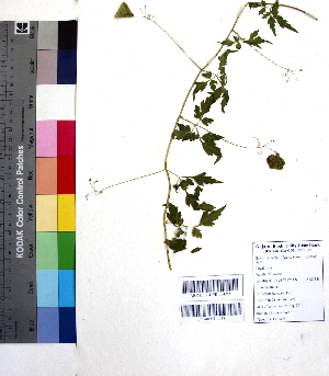 (Chaerophyllum - DNAFR001058)  @11 [ ] Copyrights (2015) Gujarat Biodiversity Gene Bank, GSBTM, DST, GoG Gujarat Biodiversity Gene Bank, GSBTM, DST, GoG