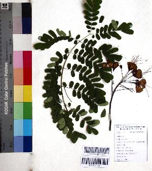 ( - DNAFR001078)  @11 [ ] Copyright (2015) Gujarat Biodiversity Gene Bank, GSBTM, DST, GoG Gujarat Biodiversity Gene Bank, GSBTM, DST, GoG