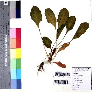 (Spinacia - DNAFR001079)  @11 [ ] Copyright (2015) Gujarat Biodiversity Gene Bank, GSBTM, DST, GoG Gujarat Biodiversity Gene Bank, GSBTM, DST, GoG