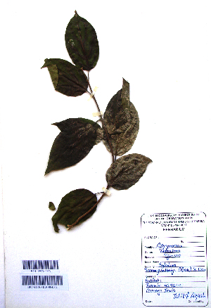 (Aganosma - DNAFR001102)  @11 [ ] Copyrights (2015) Gujarat Biodiversity Gene Bank, GSBTM, DST, GoG Gujarat Biodiversity Gene Bank, GSBTM, DST, GoG