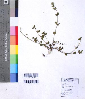 (Euphorbia indica - DNAFR001067)  @11 [ ] Copyrights (2015) Gujarat Biodiversity Gene Bank, GSBTM, DST, GoG Gujarat Biodiversity Gene Bank, GSBTM, DST, GoG
