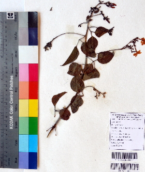 ( - DNAFR001129)  @11 [ ] Copyrights (2015) Gujarat Biodiversity Gene Bank, GSBTM, DST, GoG Gujarat Biodiversity Gene Bank, GSBTM, DST, GoG
