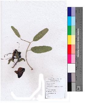 (Tecomella - DNAFR000135)  @11 [ ] Copyright (2013) Gujarat Biodiversity Gene Bank, GSBTM, GoG, India. Gujarat Biodiversity Gene Bank, GSBTM, GoG, India.