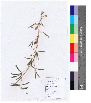 ( - DNAFR000141)  @11 [ ] Copyright (2013) Gujarat Biodiversity Gene Bank, GSBTM, GoG, India. Gujarat Biodiversity Gene Bank, GSBTM, GoG, India.