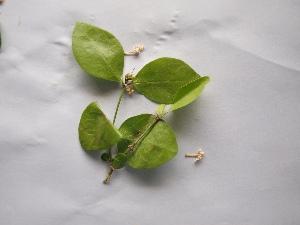 ( - DNAFR000170)  @11 [ ] Copyright (2013) Gujarat State Biotechnology Mission Gujarat Biodiversity Gene Bank