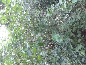 ( - DNAFR000829)  @11 [ ] Copyright (2014) Gujarat Biodiversity Gene Bank, GSBTM, DST, GoG Gujarat Biodiversity Gene Bank, GSBTM, DST, GoG