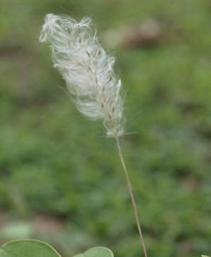 ( - DNAFR000793)  @11 [ ] Copyright (2014) Gujarat Biodiversity Gene Bank, GSBTM, DST, GoG Gujarat Biodiversity Gene Bank, GSBTM, DST, GoG