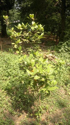 ( - DNAFR001107)  @11 [ ] Copyrights (2015) Gujarat Biodiversity Gene Bank, GSBTM, DST, GoG Gujarat Biodiversity Gene Bank, GSBTM, DST, GoG