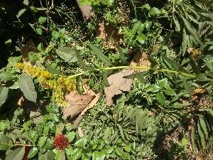 ( - DNAFR001101)  @11 [ ] Copyrights (2015) Gujarat Biodiversity Gene Bank, GSBTM, DST, GoG Gujarat Biodiversity Gene Bank, GSBTM, DST, GoG