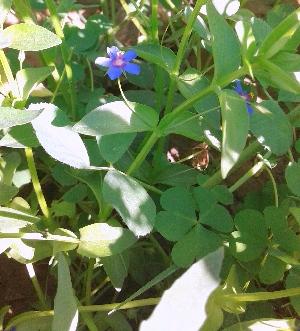 ( - DNAFR001136)  @11 [ ] Copyrights (2015) Gujarat Biodiversity Gene Bank, GSBTM, DST, GoG Gujarat Biodiversity Gene Bank, GSBTM, DST, GoG