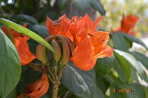 ( - DNAFR001172)  @11 [ ] Copyrights (2015) Gujarat Biodiversity Gene Bank, GSBTM, DST, GoG Gujarat Biodiversity Gene Bank, GSBTM, DST, GoG