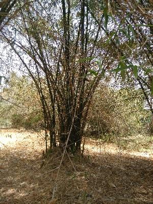 ( - DNAFR001482)  @11 [ ] Copyrights (2016) Gujarat Biodiversity Gene Bank, GSBTM, DST, GoG Gujarat Biodiversity Gene Bank, GSBTM, DST, GoG