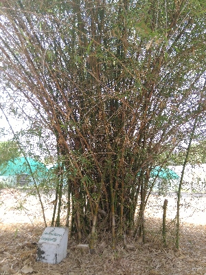 ( - DNAFR001485)  @11 [ ] Copyrights (2016) Gujarat Biodiversity Gene Bank, GSBTM, DST, GoG Gujarat Biodiversity Gene Bank, GSBTM, DST, GoG
