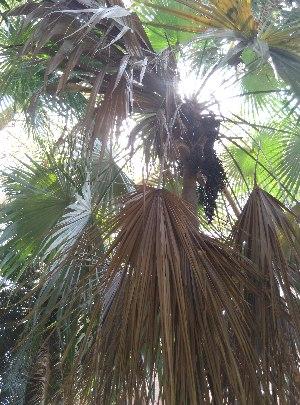 ( - DNAFR001648)  @11 [ ] Copyright (2016) Gujarat Biodiversity Gene Bank, GSBTM, DST, GoG Gujarat Biodiversity Gene Bank