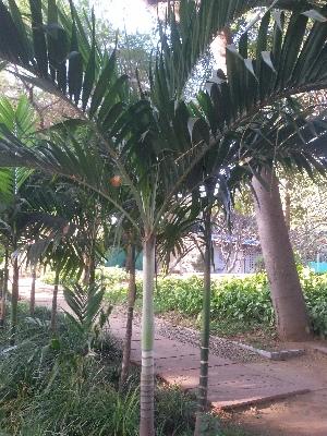 ( - DNAFR001650)  @11 [ ] Copyright (2016) Gujarat Biodiversity Gene Bank, GSBTM, DST, GoG Gujarat Biodiversity Gene Bank