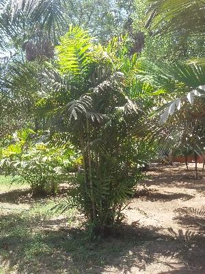 (Solfia - DNAFR001659)  @11 [ ] Copyright (2016) Gujarat Biodiversity Gene Bank, GSBTM, DST, GoG Gujarat Biodiversity Gene Bank