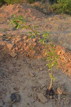( - DNAFR000206)  @11 [ ] Copyright (2014) Gujarat Biodiversity Gene Bank, GSBTM, DST, GoG Gujarat Biodiversity Gene Bank, GSBTM, DST, GoG