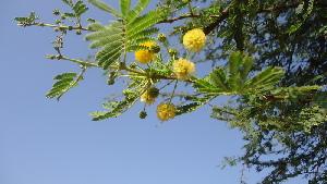 ( - DNAFR000572)  @11 [ ] Copyright (2014) Gujarat Biodiversity Gene Bank, GSBTM, DST, GoG Gujarat Biodiversity Gene Bank, GSBTM, DST, GoG