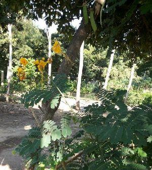 ( - DNAFR000630)  @11 [ ] Copyright (2014) Gujarat Biodiversity Gene Bank, GSBTM, DST, GoG Gujarat Biodiversity Gene Bank, GSBTM, DST, GoG