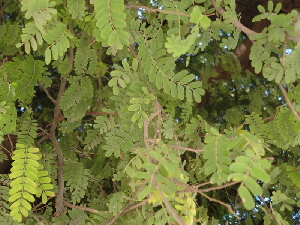 ( - DNAFR000631)  @11 [ ] Copyright (2014) Gujarat Biodiversity Gene Bank, GSBTM, DST, GoG Gujarat Biodiversity Gene Bank, GSBTM, DST, GoG