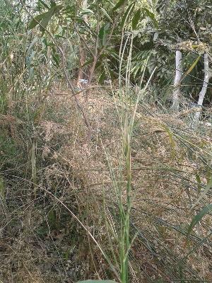 (Ophiuros - DNAFR000320)  @11 [ ] Unspecified (default): All Rights Reserved  Gujarat Biodiversity Gene Bank, GSBTM, DST, GoG Gujarat Biodiversity Gene Bank, GSBTM, DST, GoG