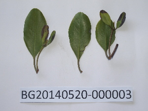 ( - DNAFR000722)  @11 [ ] Copyright (2014) Gujarat Biodiversity Gene Bank, GSBTM, DST, GoG Gujarat Biodiversity Gene Bank, GSBTM, DST, GoG