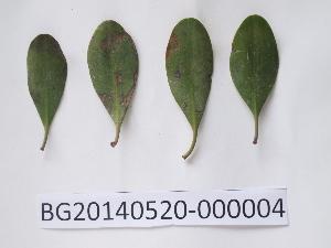 ( - DNAFR000723)  @11 [ ] Copyright (2014) Gujarat Biodiversity Gene Bank, GSBTM, DST, GoG Gujarat Biodiversity Gene Bank, GSBTM, DST, GoG