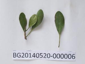 ( - DNAFR000725)  @11 [ ] Copyright (2014) Gujarat Biodiversity Gene Bank, GSBTM, DST, GoG Gujarat Biodiversity Gene Bank, GSBTM, DST, GoG