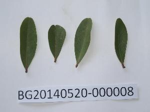 (Aegiceras - DNAFR000727)  @11 [ ] Copyrights (2014) Gujarat Biodiversity Gene Bank, GSBTM, DST, GoG Gujarat Biodiversity Gene Bank, GSBTM, DST, GoG
