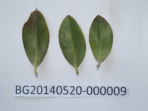 ( - DNAFR000728)  @11 [ ] Copyright (2014) Gujarat Biodiversity Gene Bank, GSBTM, DST, GoG Gujarat Biodiversity Gene Bank, GSBTM, DST, GoG