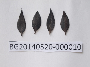 ( - DNAFR000729)  @11 [ ] Copyrights (2014) Gujarat Biodiversity Gene Bank, GSBTM, DST, GoG Gujarat Biodiversity Gene Bank, GSBTM, DST, GoG